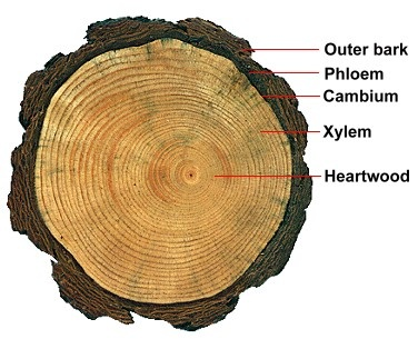 Tree Ring Lab